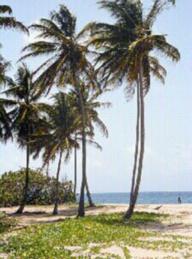 external image coconut.jpg