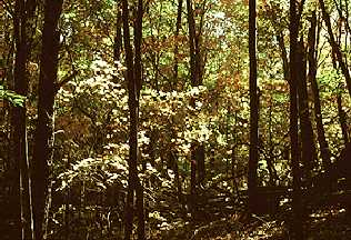 height of trees in tropical deciduous forest