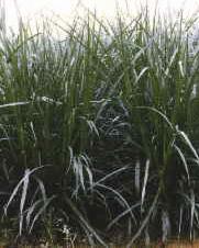 Blue Planet Biomes Elephant Grass