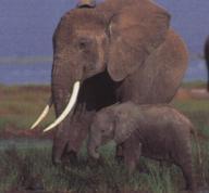 external image elephants.jpg