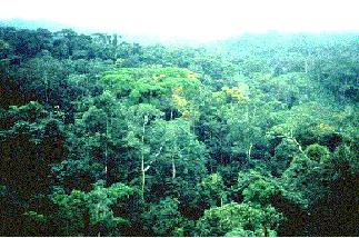Tropical rainforest - Wikipedia, the free.