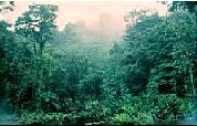 external image rainforest_climate.jpg